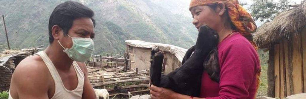 Dierenarts in Nepal