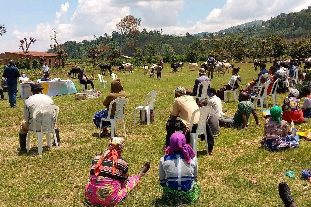 koe handel Heifer Rwanda