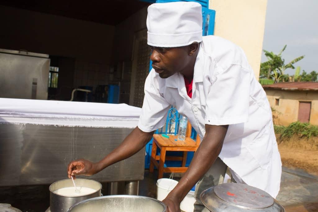 Dairy Development Heifer Rwanda