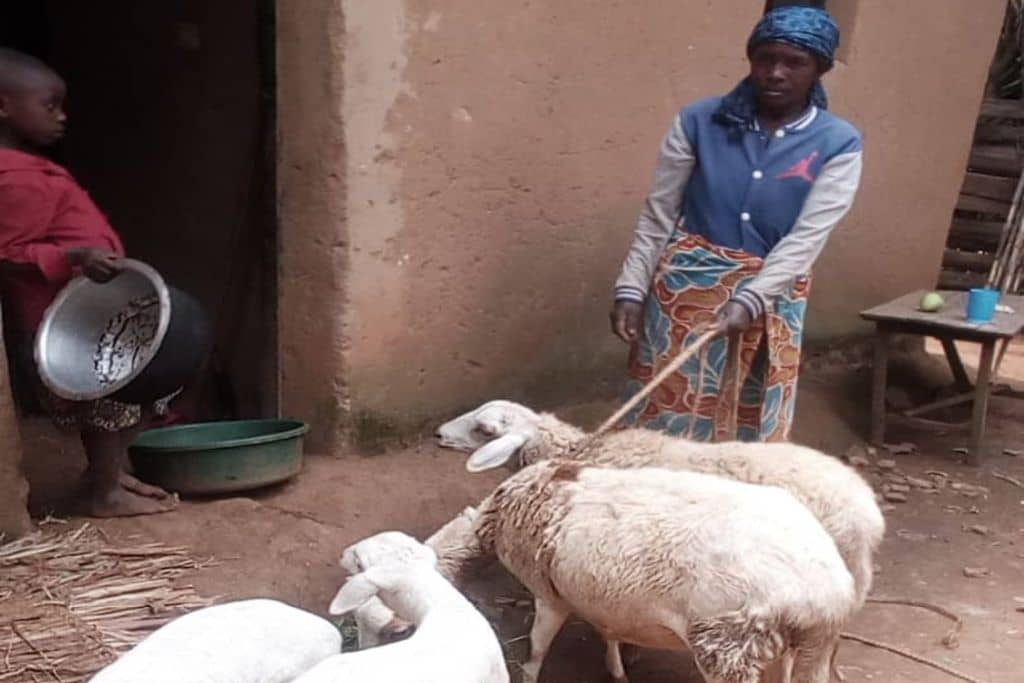 vrouw met schapen