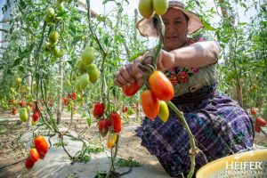 Landbouwtraining <br> & zaden