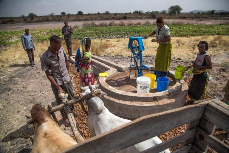 klimaatproject tanzania heifer