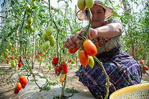 Training in landbouw